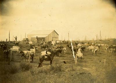 Dairy farm, Auroa Road, South Taranaki