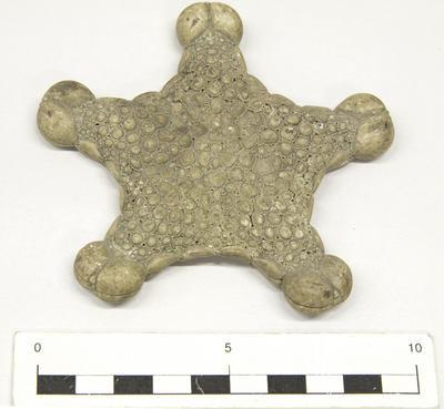 Biscuit Star (Pentagonaster pulchellus)