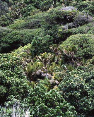 Tongaporutu Coastline - native bush, 9 December 2003