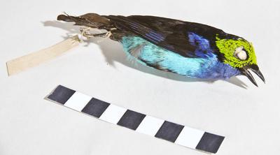 Specimen, Bird