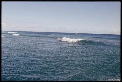 Lions Convention, Surfers