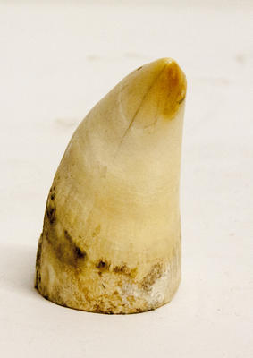 Whale tooth
