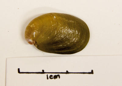 Slug, Land
