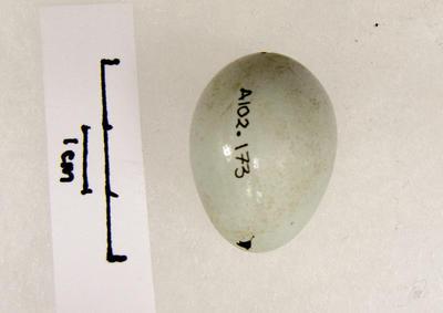 Egg, Bird