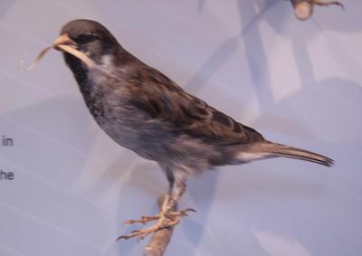 Sparrow, House