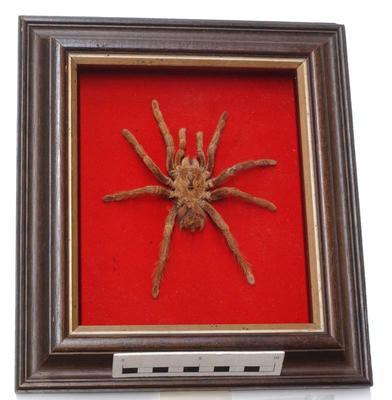 Spider; TM2002.535
