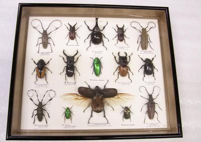 Framed beetles