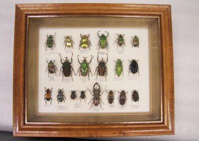 Beetles, Framed