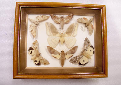 Insects, Framed