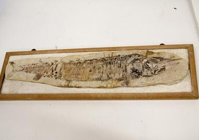 Fossil, Fish