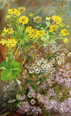 """""""Ranunculus nivicola""""; Nov 1911; A65.876"""