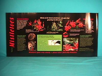 Native Mistletoes [poster]