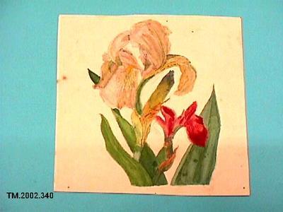 Untitled (Iris); TM.2002.340