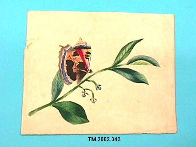 Untitled (Butterfly and flowers); TM.2002.342