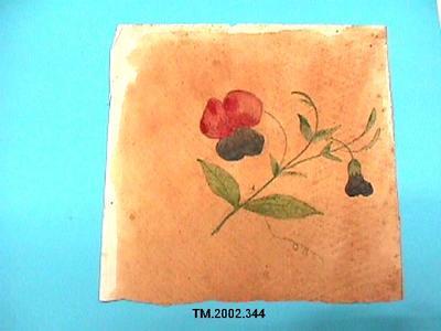 Untitled (Sweet pea flower)