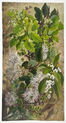 """""""Rohatara, Ngaio, Seed Clematis""""; Dec 1897; A65.754"""