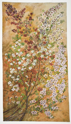 """Manuka, leptospermum""; 1925; A65.000"