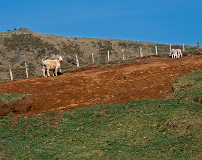 Tongaporutu Coastline - erosion, Mackenzie's Farm, 6 September 2003