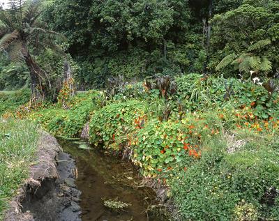 Tongaporutu Coastline - stream, Tongaporutu Reserve, 3 December 2003
