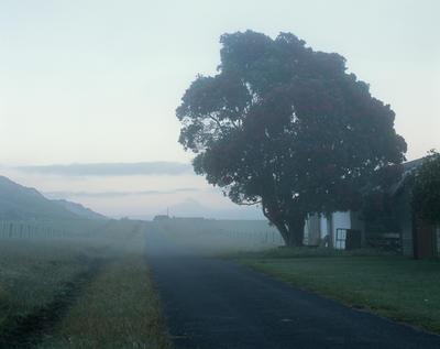 Tongaporutu Coastline - Clifton Road in early morning mist, 5 January 2004