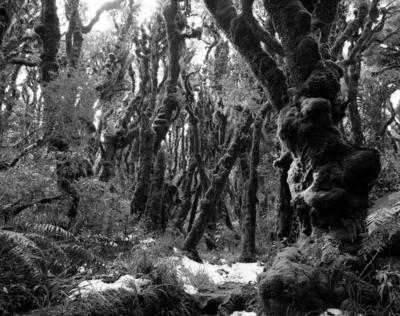 """""""The Goblin Forest"""""""