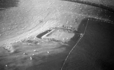 Tau-Te-One pā, Hāwera; Jun 1961; AGB-0425