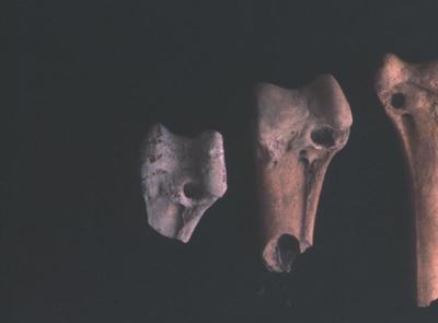 Bones, Ohawe beach site; AGB-0878