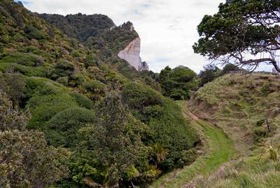 Tongaporutu Coastline - Whitecliffs Bush, 18 October 2009; 18 Oct 2009; PHO2011-1922