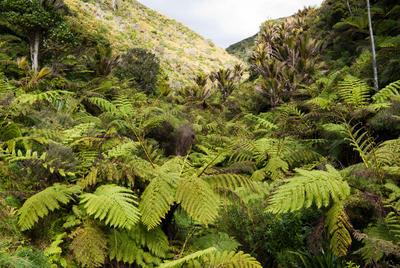 Tongaporutu Coastline - Bush One, 18 October 2009
