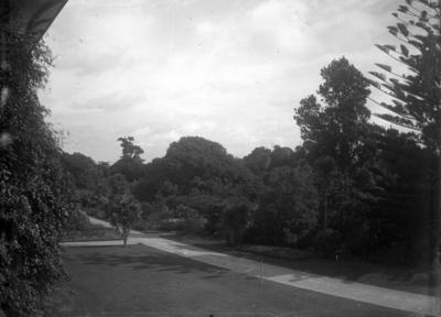 Garden at Brooklands; Jan 1890; PHO2015-0026