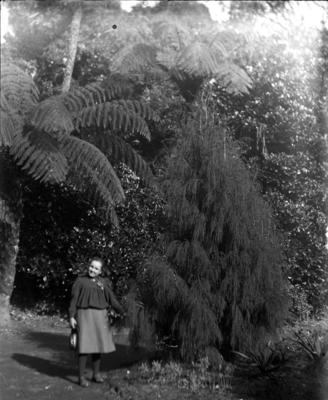Girl standing with rimu tree on 'Rimu Lawn'; Jan 1890; PHO2015-0030