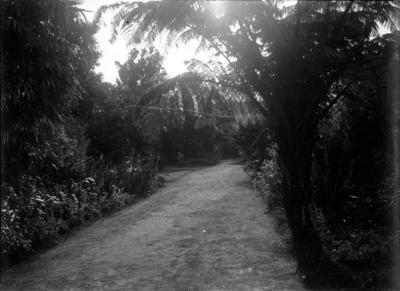 Brooklands; Jan 1890; PHO2015-0032