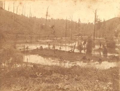 Flooded Paddock, Pohokura